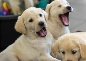 Funny cute  puppies are playing with together