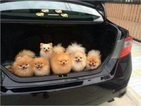 Funny Cutest Kidnapping