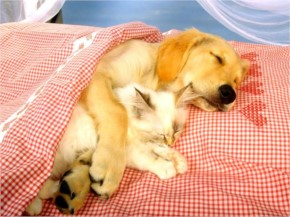 Funny Dog and cat cuddling