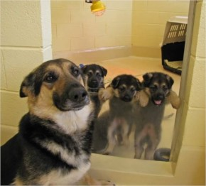 Funny Dog Family Pic