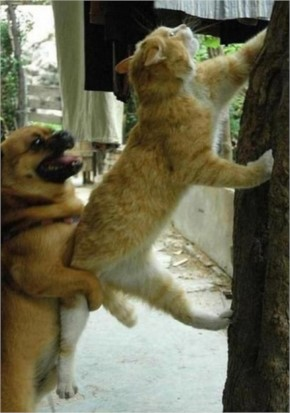Funny Dog Helping Cat