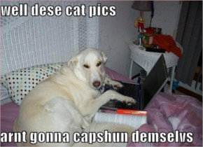 Funny Dog Picture With Laptop