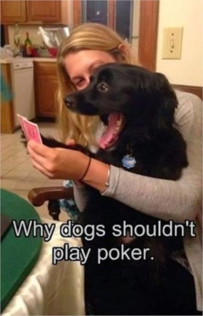 Funny Dog  Poker Face