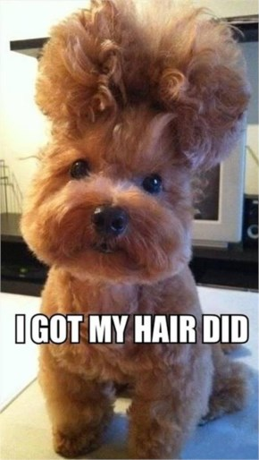 Funny Dog Says - I Got My Hair Did..It Looks So Funny