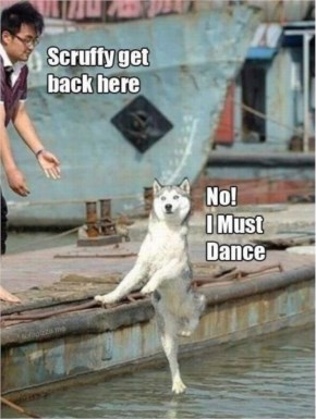 Funny Dog SCRUFFY GET BACK HERE, NO I MUST DANCE...DOG DANCING ON WATER