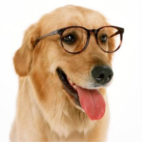 Funny Dog with Glass
