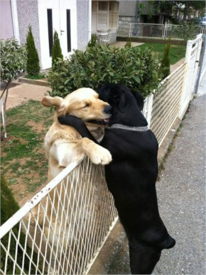 Funny Dogs are Best Friends Forever