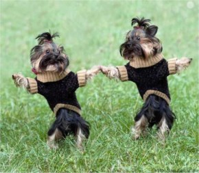 Funny dogs are dancing And Singing For An Happy Easter
