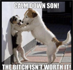 Funny Dogs Calm Down Son