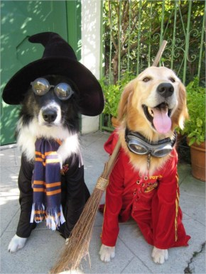 Funny  Dogs Dressed In Costumes For Halloween Most Funniest Pictures