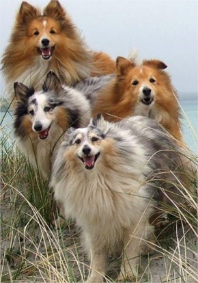 Funny Dogs  Family Photo