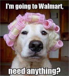 Funny Dogs Going To Walmart Need Anything