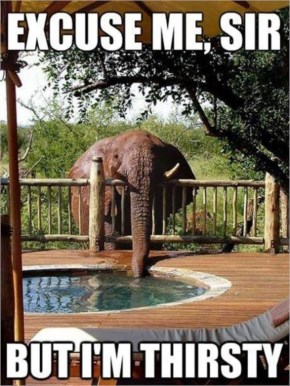 Funny Elephant Drinking Water From Pond