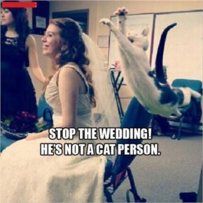 Funny Image Stop The Wedding!