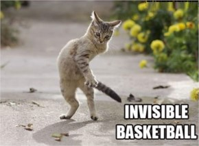 Funny Invisible Cats