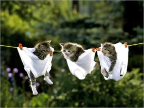 Funny Kittens In Underwear On Clothesline Photo