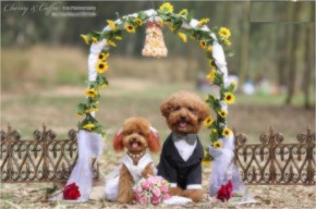 Funny Little Dogs Wedding Couple Pic