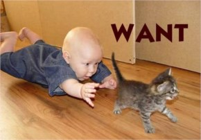 Funny Little Kid Chasing A Cat