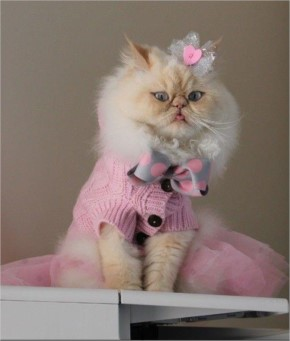 Funny Luna the Fashion Kitty