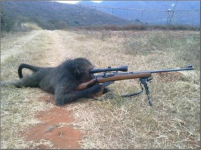 Funny Monkey With A Gun