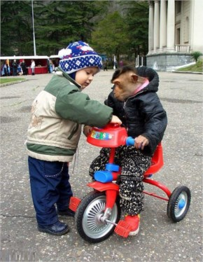 Funny Monkeys Riding Bicycles....