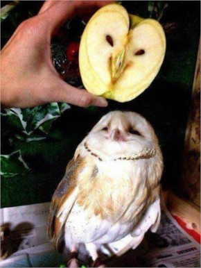 Funny owl in an apple over an owl