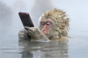 Funny Photo Of A Monkey Using An Iphone