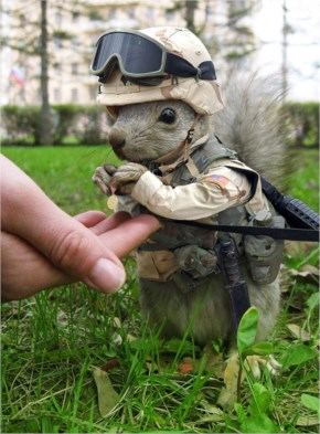 Funny Pictures About Marine Squirrel