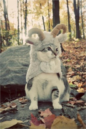 Funny Pictures...cat dressed as goat