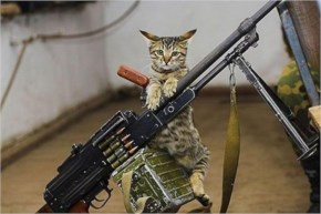 Funny Pictures Cat Fortress Gun