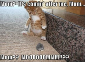 Funny Pictures Kitten Toy Mouse...Mom It's Coming After Me Mouse