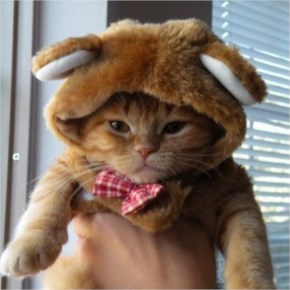 Funny Pictures Of Cats Wearing Hats...From Top Hats To Flat Caps