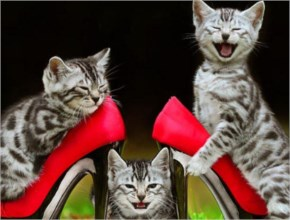 Funny Pictures Of Cute Cats Wearing Red Shoes And Playing
