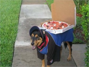 Funny Pizza Delivery dog