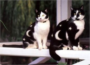 Funny Pretty painted cats