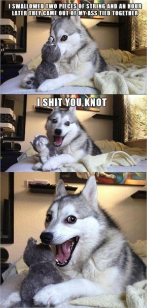 Funny Pun Dog Pictures