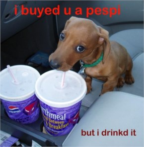 Funny puppy buyed you a pepsi but i drinked it weiner puppy