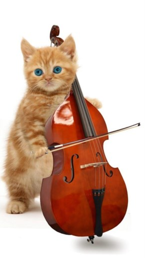 Funny Purring, Playing And Talking Cat Music On The Musical Instruments