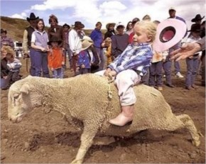 Funny Sheep Pictures  Out Of Control