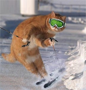 Funny Skiing Cat Picture