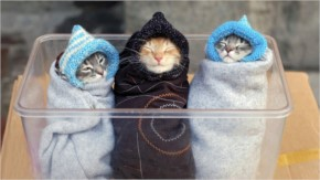 Funny Three baby burritos