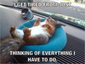 Funny Tired Squirrel