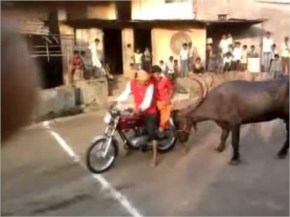 Funny Video how cow gone Mad after two bikers