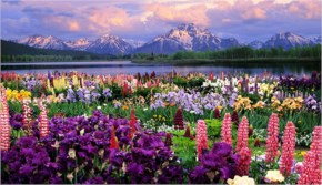 Grand Teton And Wildflowers Wyoming