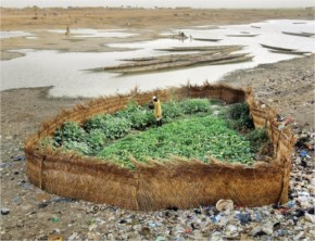 Green Plant near sea garbage- really motivating
