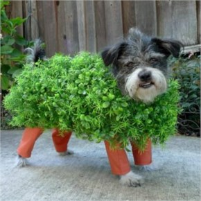 Hilarious Homemade Halloween Costumes for your Dog-1 Chia Pet Dog Costume