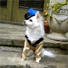 Hilarious Homemade Halloween Costumes For Your Dog-12 A Night At The Opera