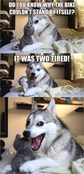 Husky And Dog Faces...Dump A Day Funny Pictures Of The Day