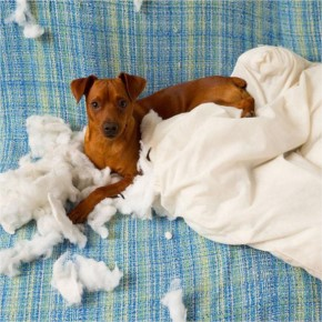 I didn't do it-Who owns a naughty pet