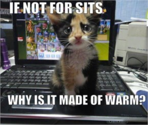 If Not For Sits Why is it made of warm!  Very Funny Cute Cat